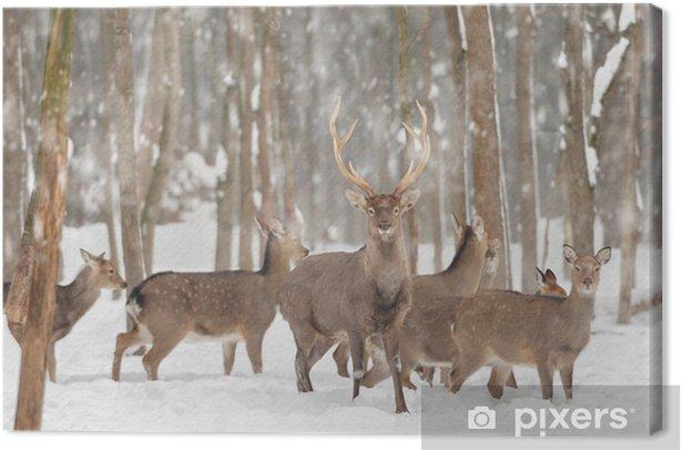 Deer Canvas Print - Styles