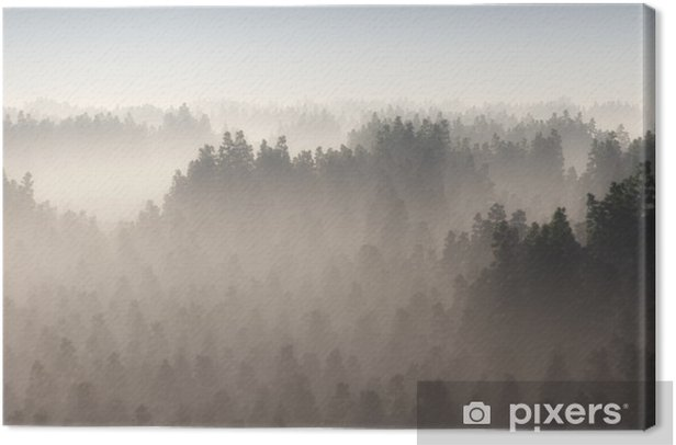 Dense pine forest in morning mist. Canvas Print - Landscapes
