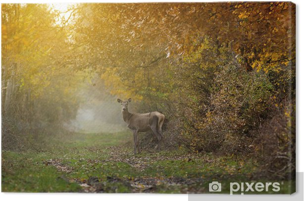 Doe in forest Canvas Print - Mammals