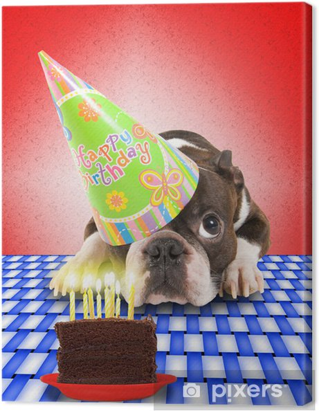 Dog Birthday Card Canvas Print