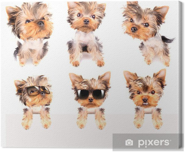 dog with bunner isolated Canvas Print - Signs and Symbols