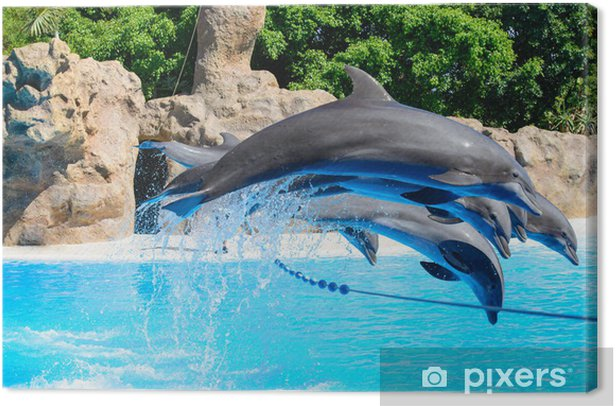 Dolphins Canvas Print - Themes