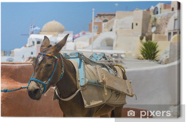 Donkey in Santorini, Greece Canvas Print - Europe