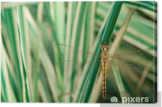 dragonfly in autumn park Canvas Print - Other Other
