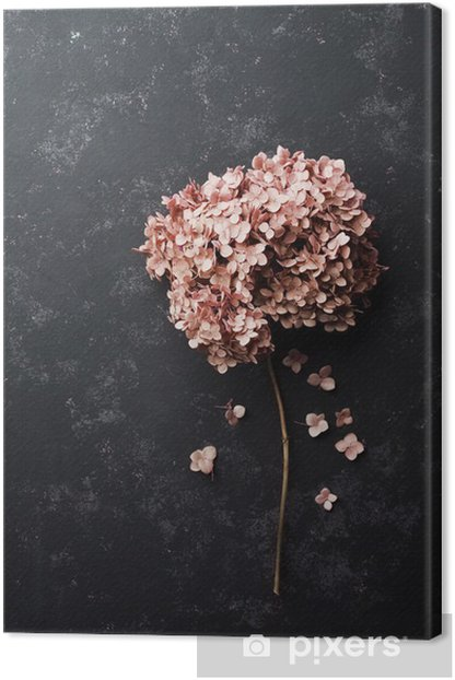 Dried flowers hydrangea on black vintage table top view. Flat lay styling. Canvas Print - Plants and Flowers