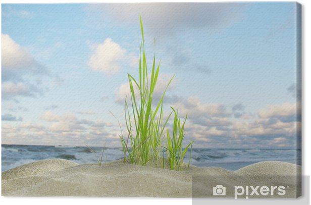 dune grass and sea Canvas Print - Plants