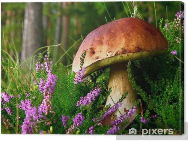 edible mushroom - cep with flowering Heather Canvas Print - Heather