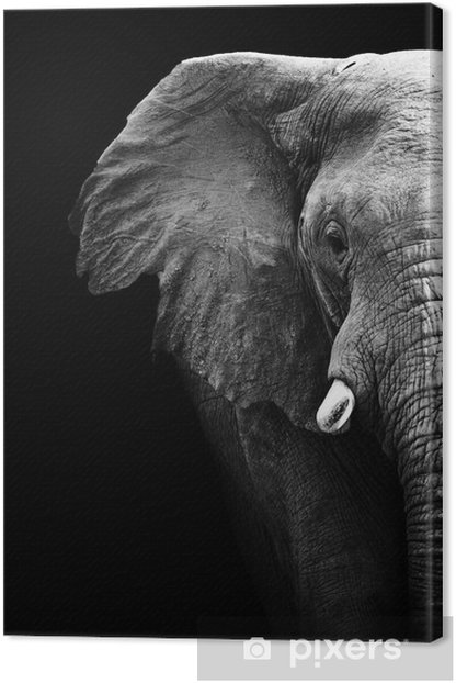 Elephant Close Up Canvas Print - Styles