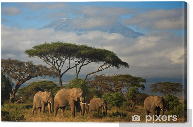 Elephant family in front of Mt. Kilimanjaro Canvas Print - Elephants