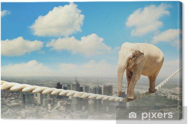 Elephant walking on rope Canvas Print - Life
