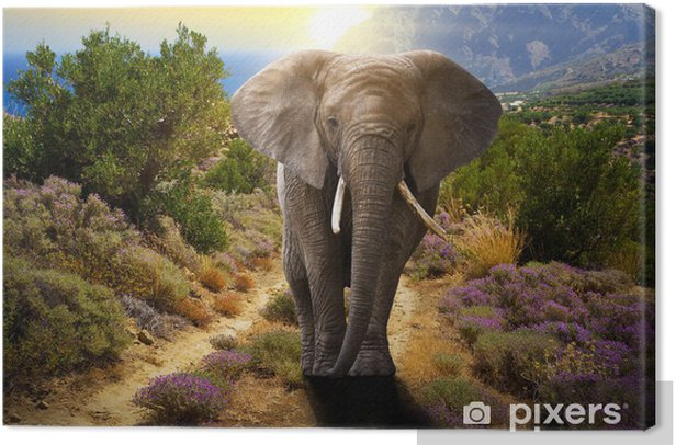 Elephant walking on the road at sunset Canvas Print - Themes