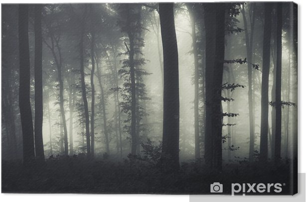 evening light in a dark misty forest Canvas Print - Styles