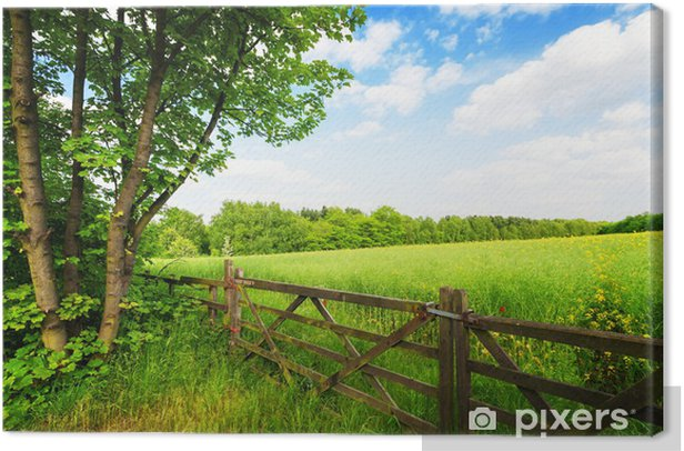 Fence in the green field under blue sky Canvas Print - Themes