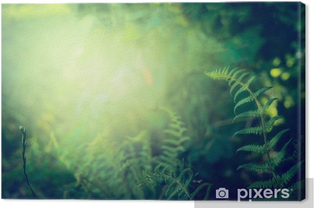 Fern leaves on dark jungle or rainforest nature background, outdoor Canvas Print - Plants and Flowers