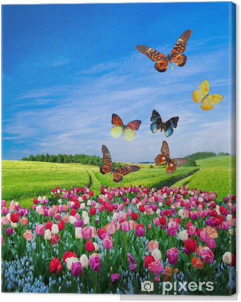 Field of colorful flowers and a butterfly group Canvas Print - Themes