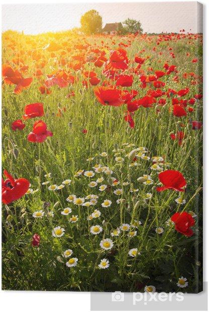 Field of Corn Poppy Flowers Canvas Print - Themes