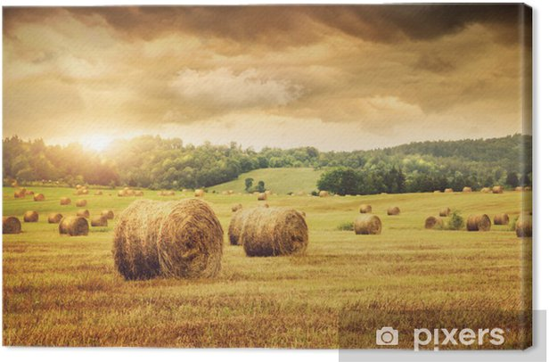 Field of freshly bales of hay with beautiful sunset Canvas Print - Themes