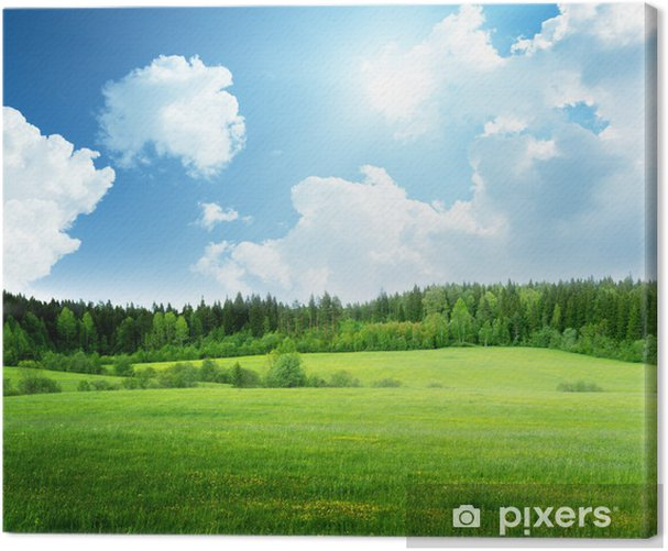 field of grass and perfect sky Canvas Print - Themes