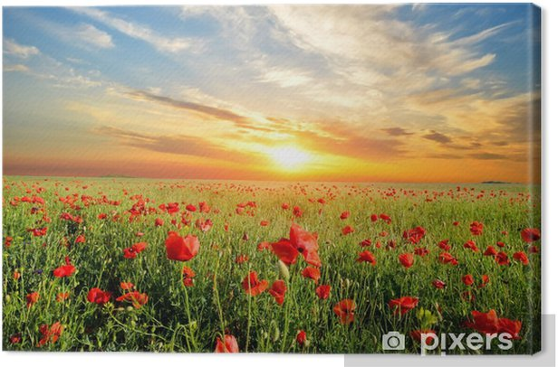 field with poppies Canvas Print - Themes