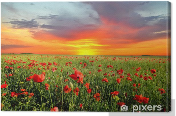 Field with poppies Canvas Print - Meadows, fields and grasses