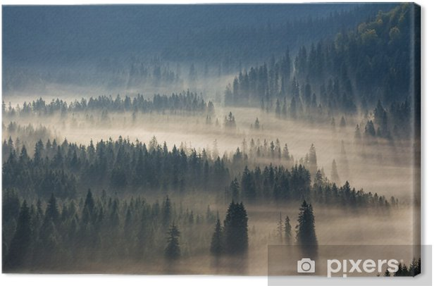 fir trees on a meadow down the will to coniferous forest in foggy mountains Canvas Print - Autumn