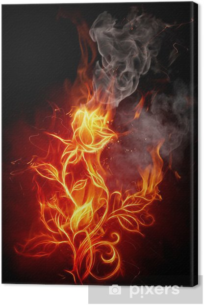 Fire rose Canvas Print - Flowers
