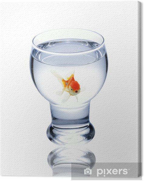 fish in drinking glass Canvas Print - Aquatic and Marine Life