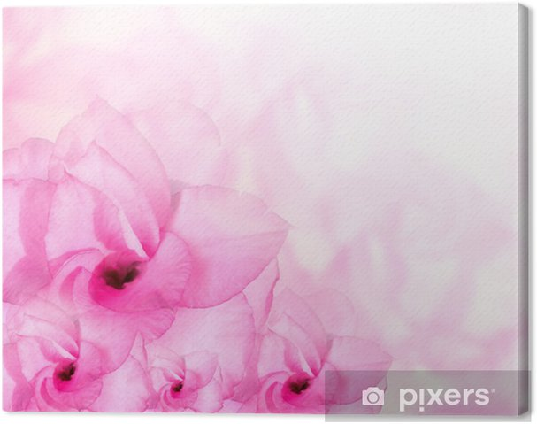 Flower Background Pink Azalea Flowers Canvas Print Pixers We