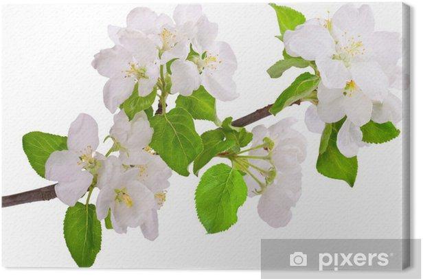 Flowering branch of apple-tree Canvas Print - Apple trees