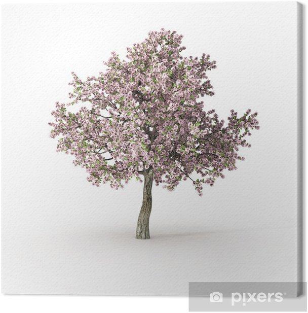 flowering tree on white Canvas Print - Seasons