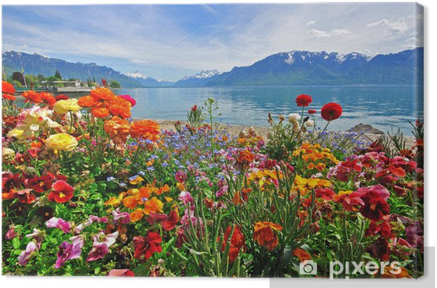 Flowers in swiss Alps Canvas Print - Destinations