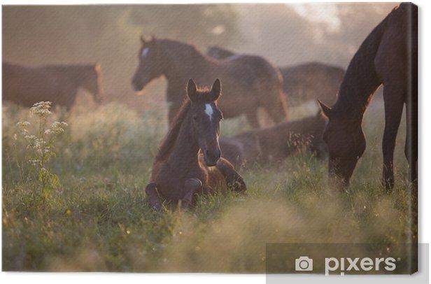 Foal at dawn Canvas Print - Animals