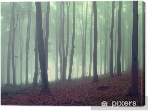 fog in a beautiful forest Canvas Print - Themes
