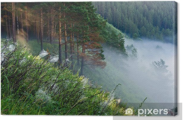 Fog on the edge of the forest Canvas Print - Forests