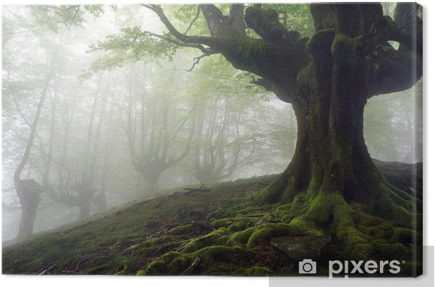 foggy forest with mysterious trees with twisted roots Canvas Print - Themes