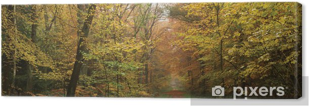 Foggy morning in forest Canvas Print - Seasons