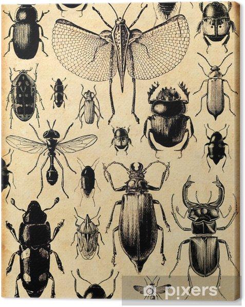 fond insectes rétro Canvas Print - Styles