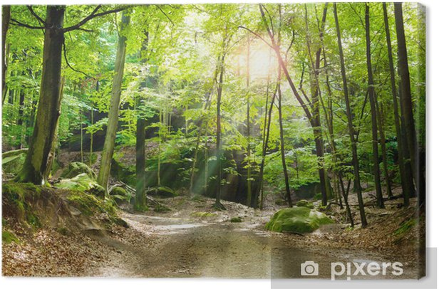Forest glade Canvas Print - Outdoor Sports