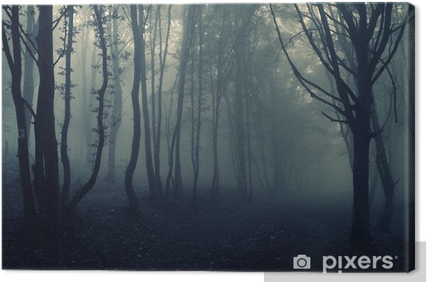 forest landscape with fog Canvas Print - Themes