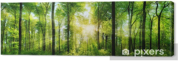 Forest panorama with sunbeams Canvas Print - Themes