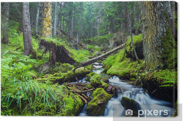 Forest River Canvas Print - Themes