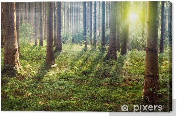 Forest Sunset Canvas Print - Themes