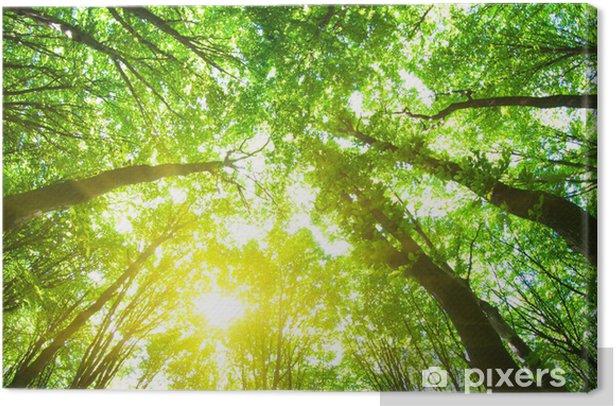 forest trees Canvas Print - Destinations