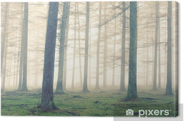 forest with fog and vintage effect Canvas Print - Plants and Flowers