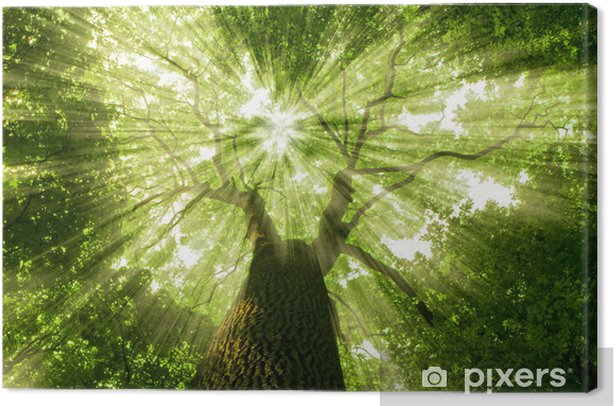 forest Canvas Print - Styles