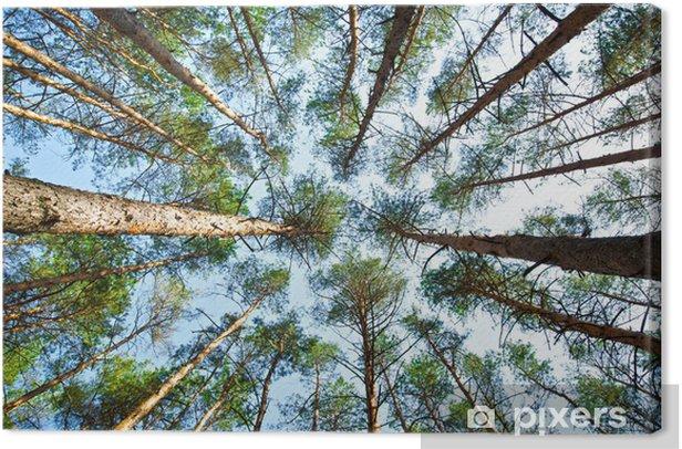 forest Canvas Print - Seasons