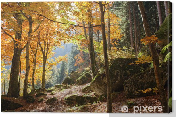 foresta in autunno Canvas Print - Themes