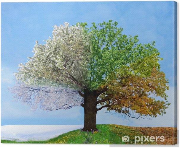 Four season tree Canvas Print -