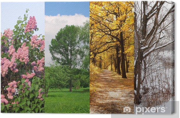 four seasons spring, summer, autumn, winter trees collage Canvas Print • Pixers® - We live to change
