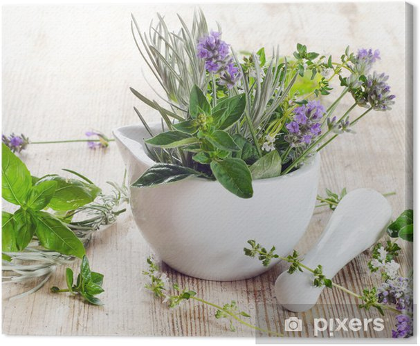 Fresh herbs Canvas Print - Styles
